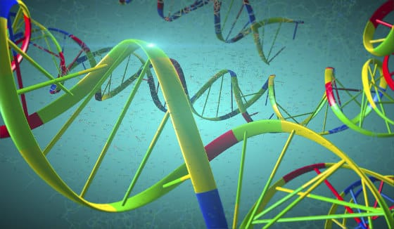 BRCA Genes