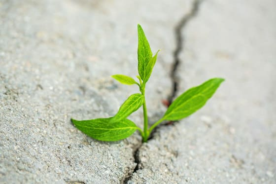 Plant growth through concrete illustrating the power of hope.